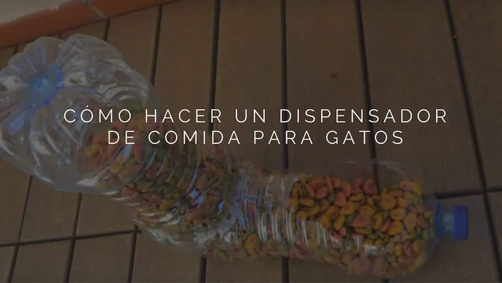 Dispensador-de-comida-para-gatos-con-botellas-recicladas