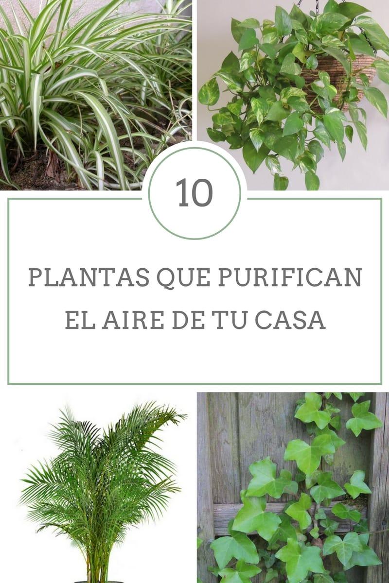 10 plantas que purifican el aire de tu casa for Como se llaman las plantas ornamentales