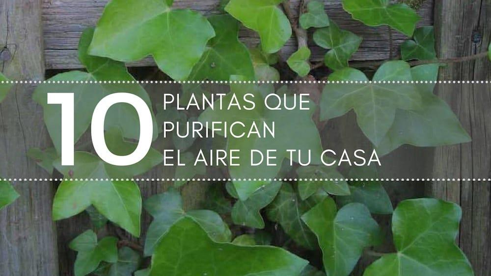 10 plantas que purifican el aire de tu casa for Plantas interior sin luz