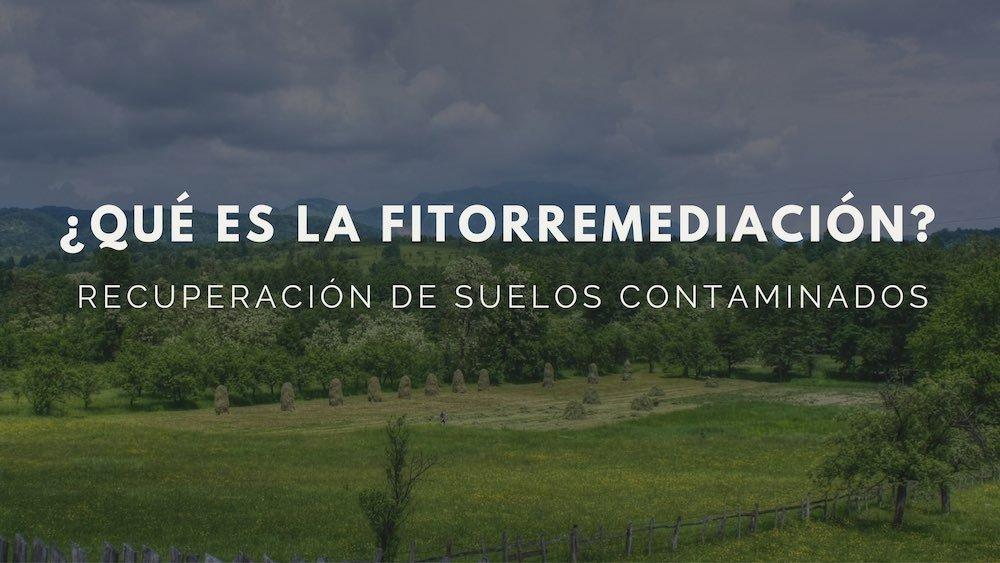 Fitorremediación: Una alternativa natural para recuperar suelos contaminados