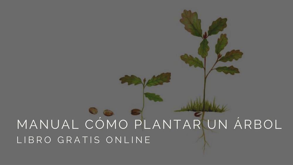 Manual-cómo-plantar-un-árbol
