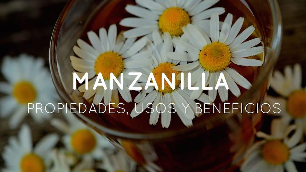 La manzanilla, una planta con propiedades medicinales sorprendentes