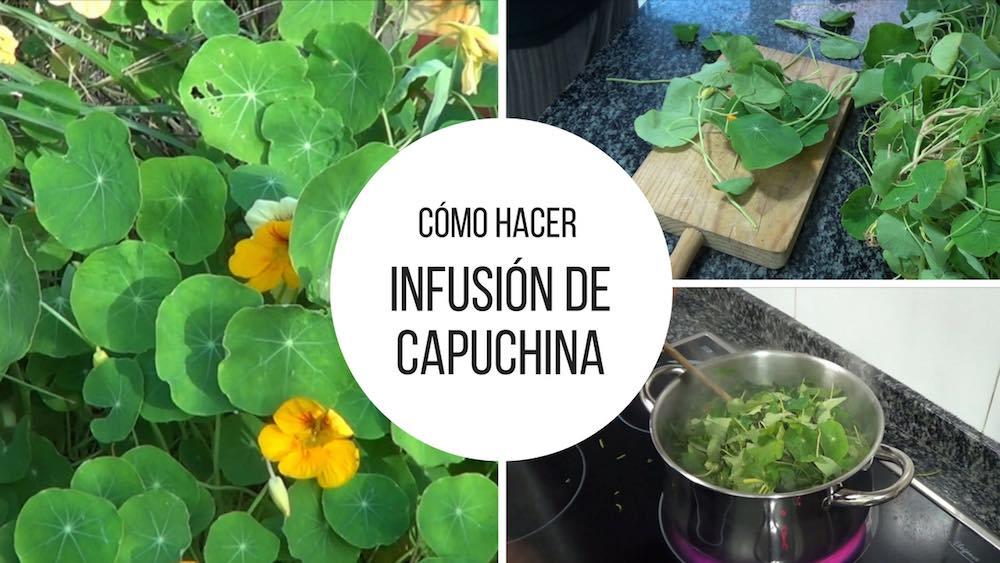 Infusión de capuchina, un fungicida súper eficaz