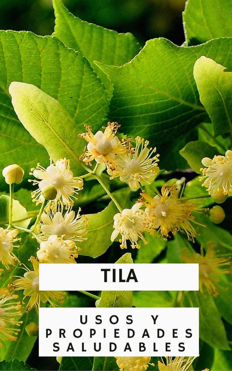 tila-planta-medicinal