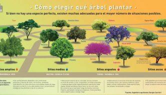 Tabla interactiva que te ayudará a elegir qué árbol plantar