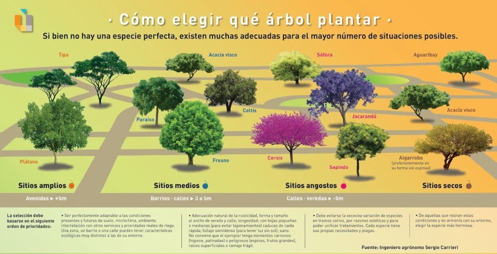 Tabla interactiva que te ayudará a elegir que árbol plantar