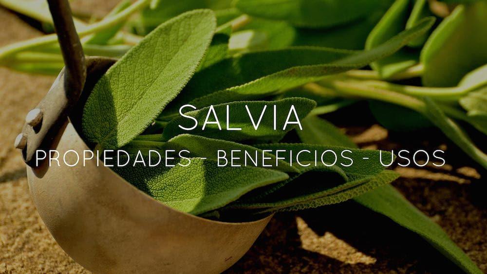 Propiedades usos y beneficios de la salvia for La salvia en la cocina