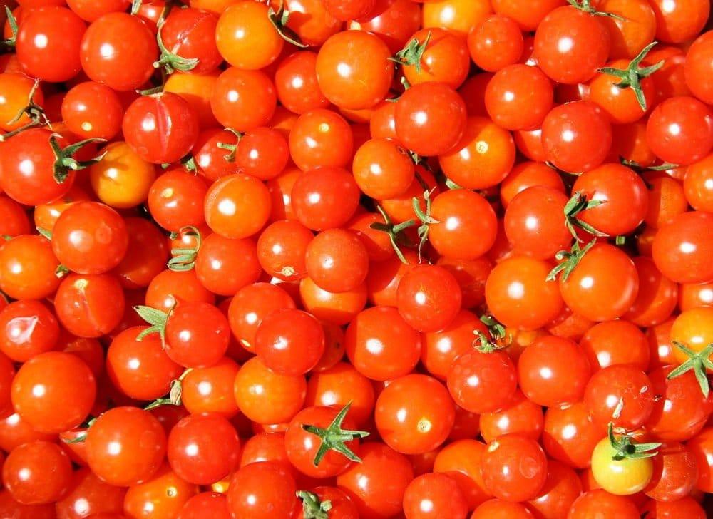 Cultivar tomates cherry orgánicos caseros