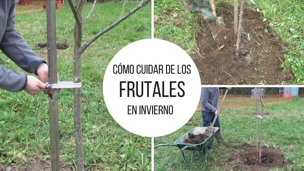 Cómo cuidar de los frutales en invierno