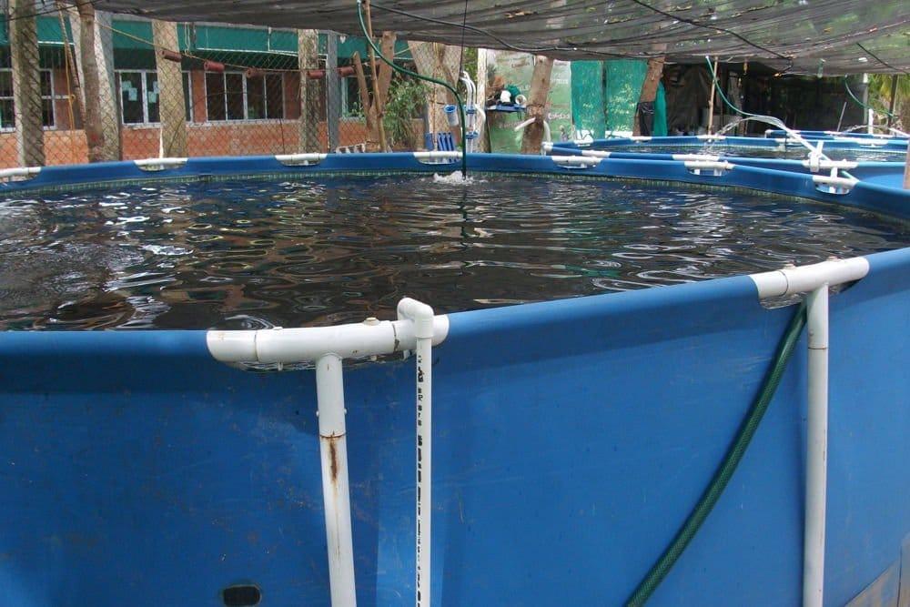 Sistema sabi o c mo una familia puede producir 190 kilos for Como hacer una granja de peces