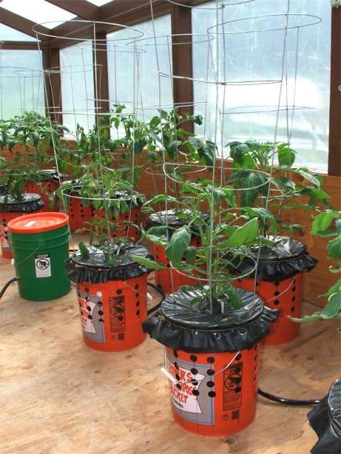 C mo plantar tomates en macetas con riego autom tico - Plantar limonero en maceta ...