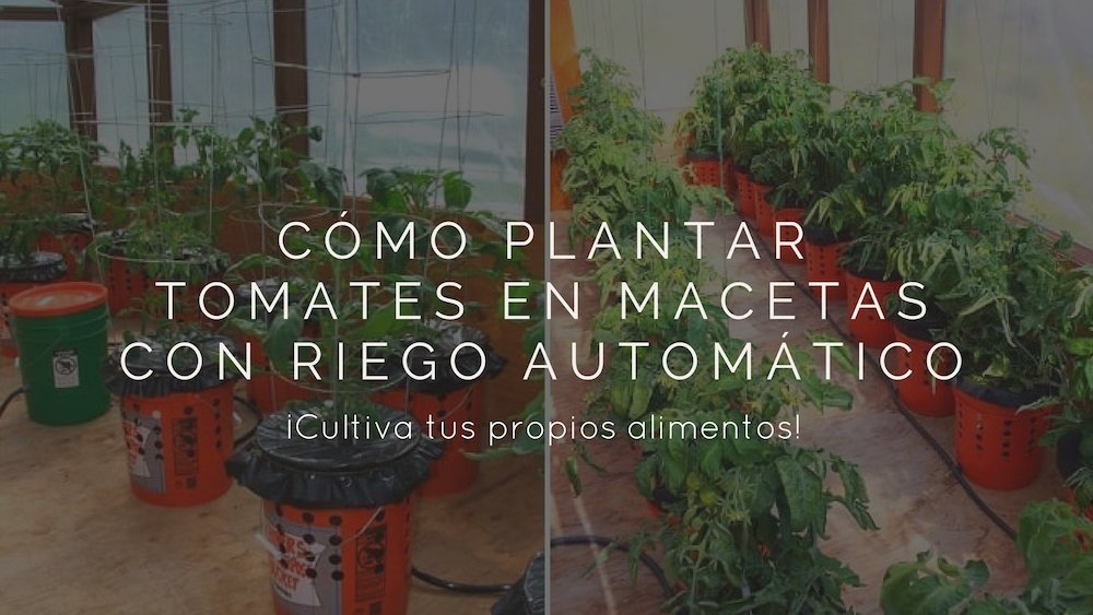 C%c3%b3mo-plantar-tomates-en-macetas-riego-autom%c3%a1tico