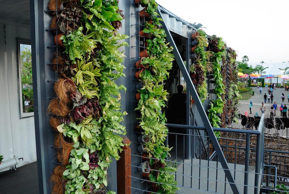 Beneficios de tener un jardín o huerto vertical
