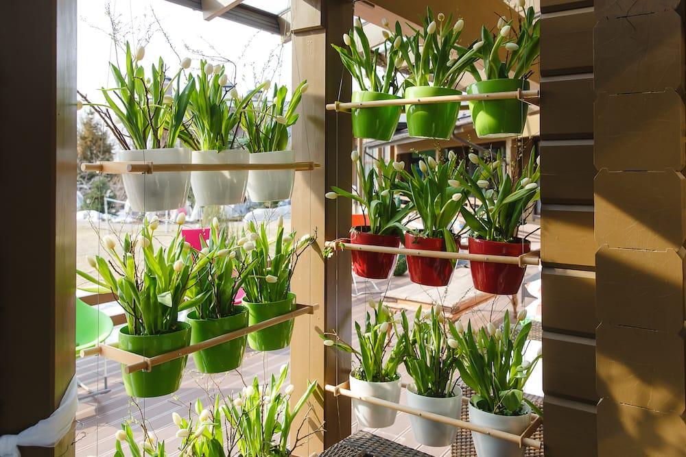 7 beneficios de tener un jard n o huerto vertical en casa - Como hacer un jardin vertical de interior ...