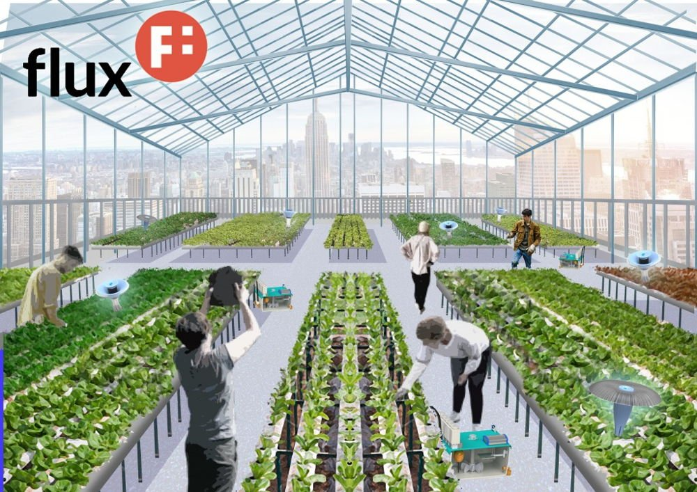 robot hidroponia, cultivos hidroponicos