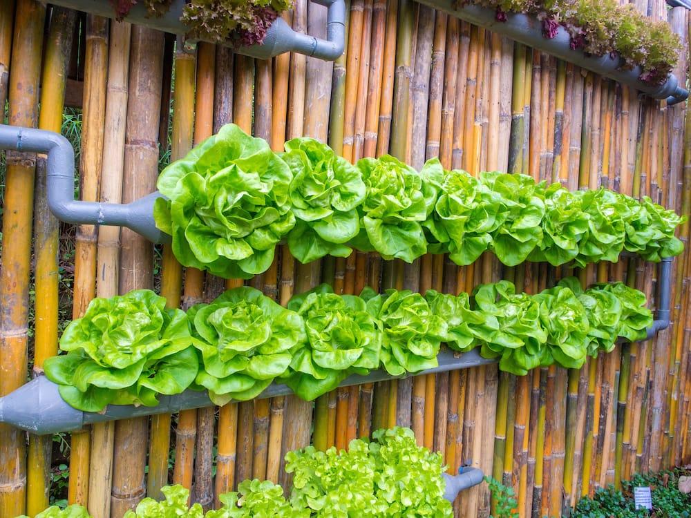 Huerto o jardín vertical casero