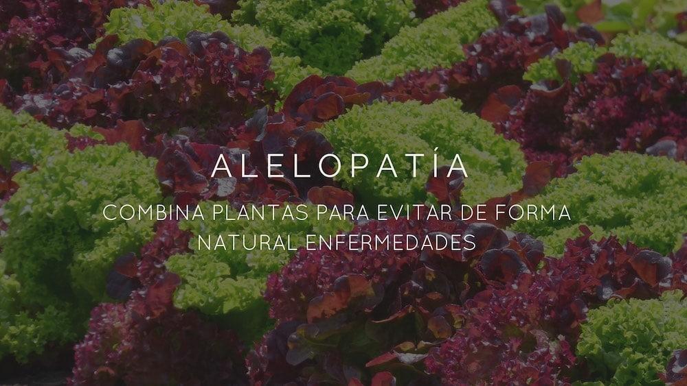 Alelopatía2