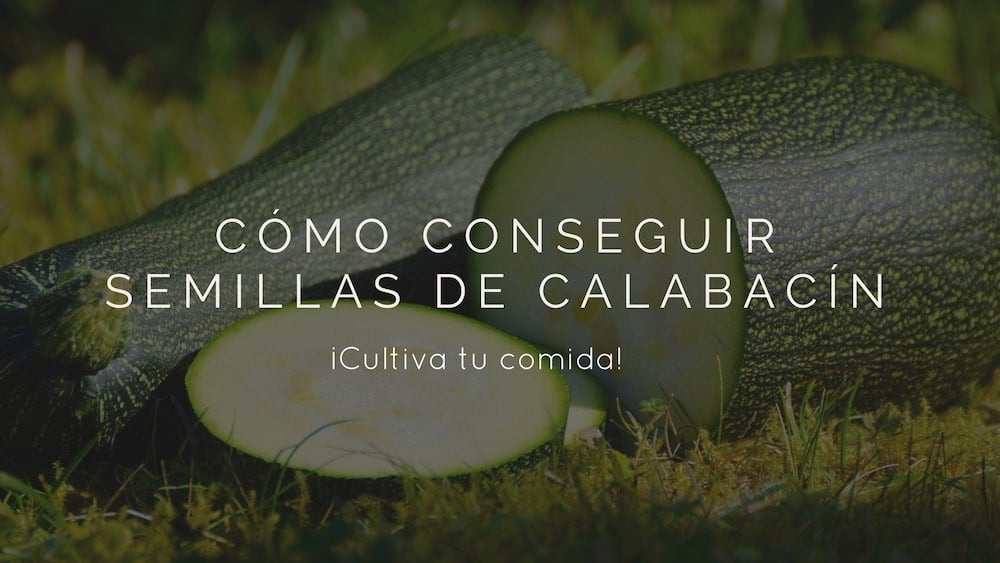 C%c3%b3mo-conseguir-semillas-de-calabac%c3%adn