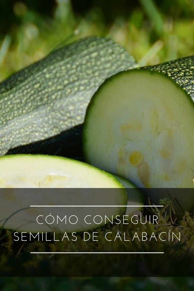 Cómo conseguir semillas de calabacín