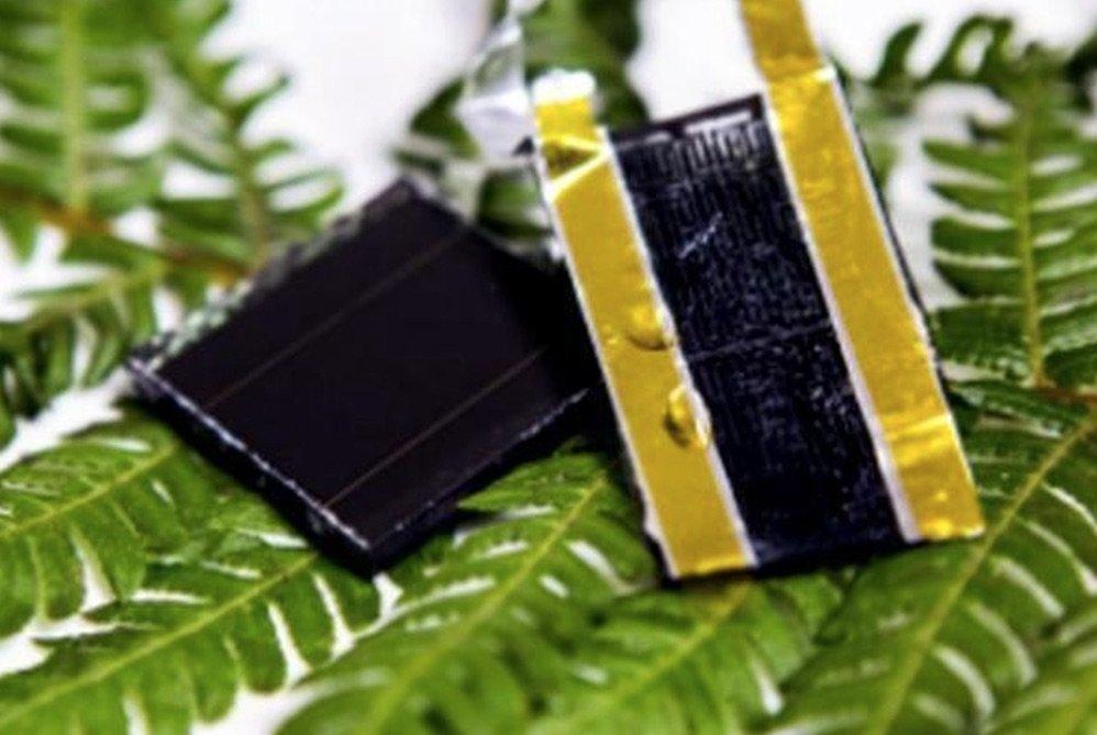 Hojas-del-helecho-bateria