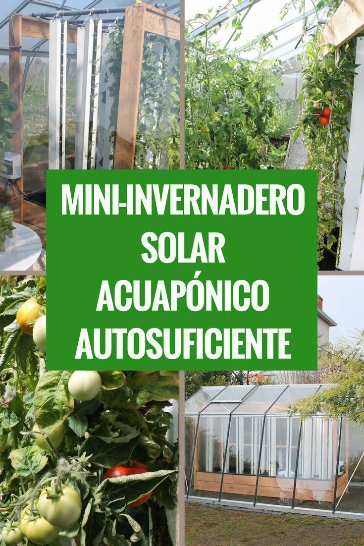 Myfood, hasta 500 kilos de alimentos al año con tu propio mini-invernadero solar acuapónico