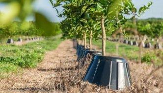 Tree T-PEE. Un protector que reduce en un 90% la necesidad de agua y fertilizantes de los árboles