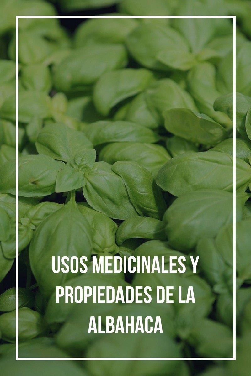 USOS MEDICINALES Y PROPIEDADES DE LA ALBAHACA