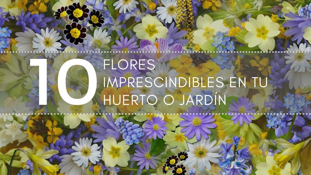 10 flores imprescindibles en tu huerto o jardín