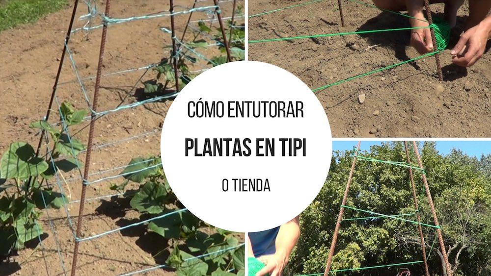 Cómo entutorar plantas en tipi o tienda