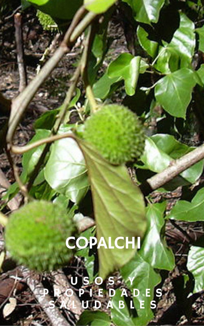 Beneficios, propiedades y usos del Copalchi