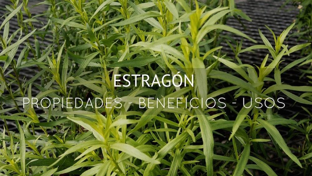 Propiedades, Beneficios y usos del Estragón