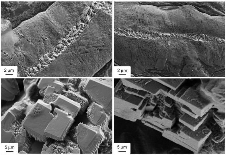 El hongo que puede autorreparar el cemento y combatir la contaminación