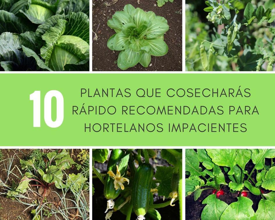 10 Plantas que cosecharás rápido recomendadas para hortelanos impacientes