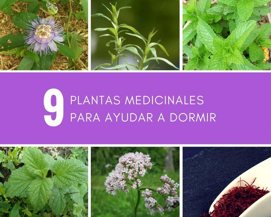 Plantas medicinales para ayudar a dormir