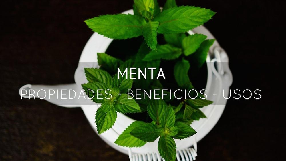 Los grandes beneficios y propiedades medicinales de la Menta