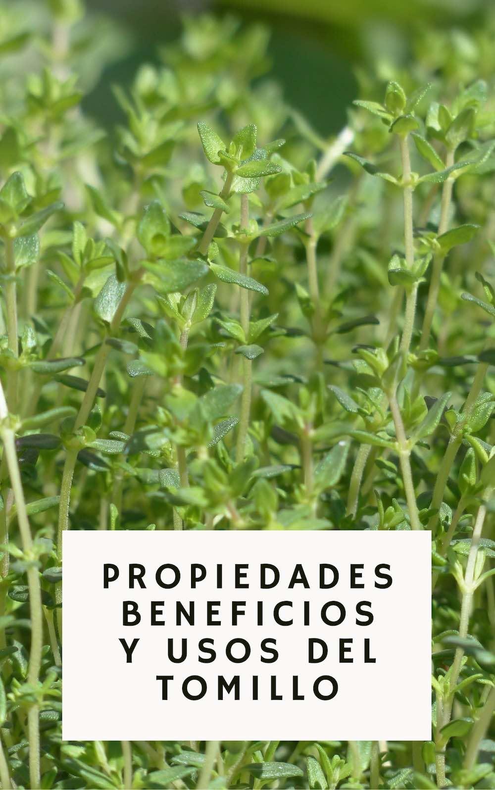 Los Grandes Beneficios Y Propiedades Medicinales Del Tomillo