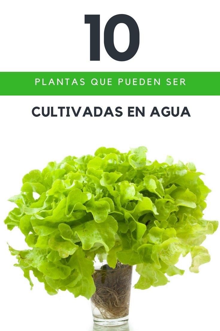 10 plantas que pueden ser cultivadas en agua