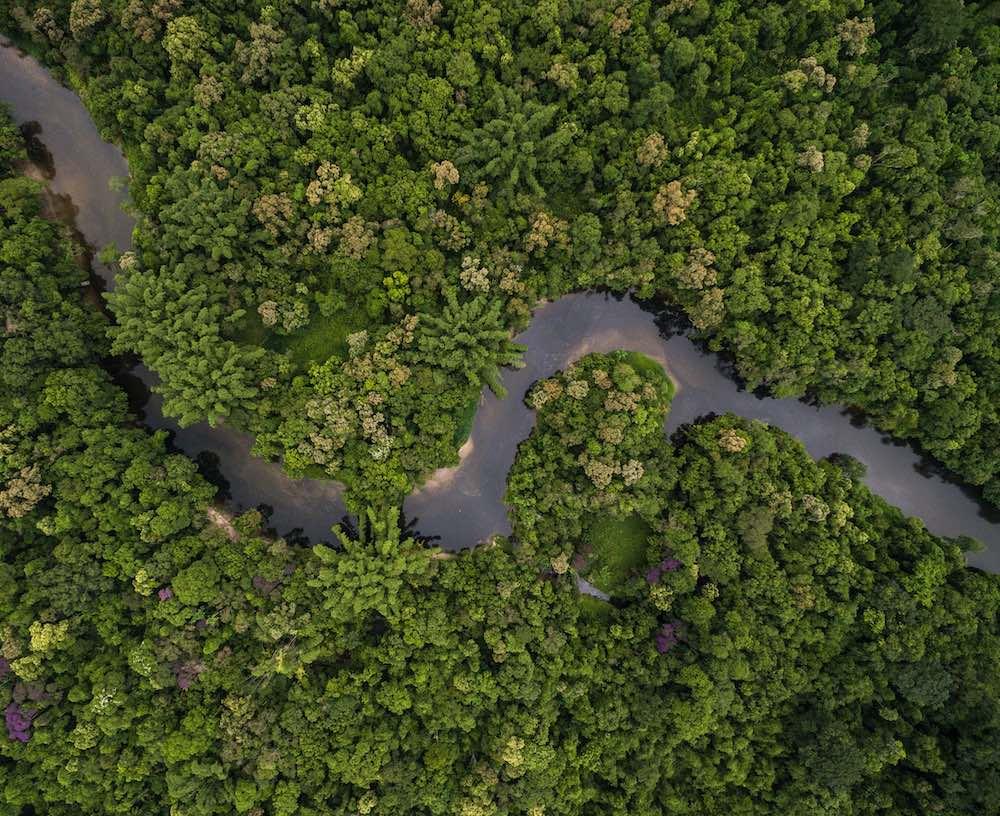 La reforestación tropical más grande de la historia donde se plantarán 73 millones de árboles