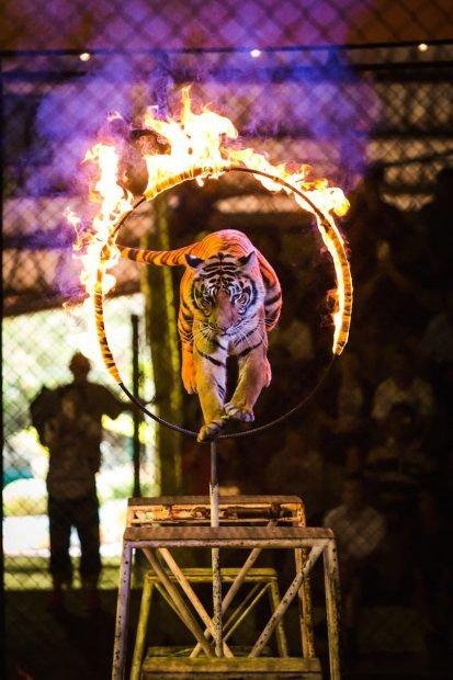 Italia prohíbe el uso de animales en circos y otros espectáculos