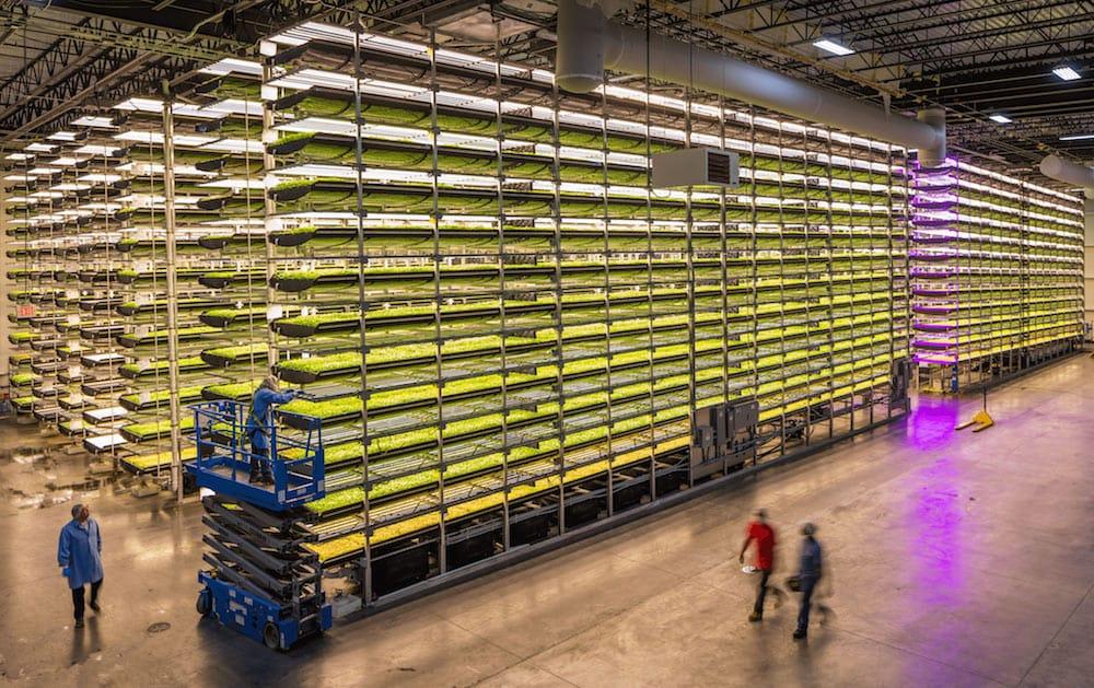 Sistema de cultivo vertical más grande del mundo