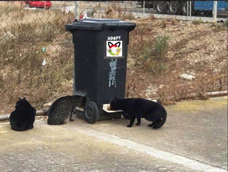 CatDonals, puntos de alimentación permanentes 24 h para gatos