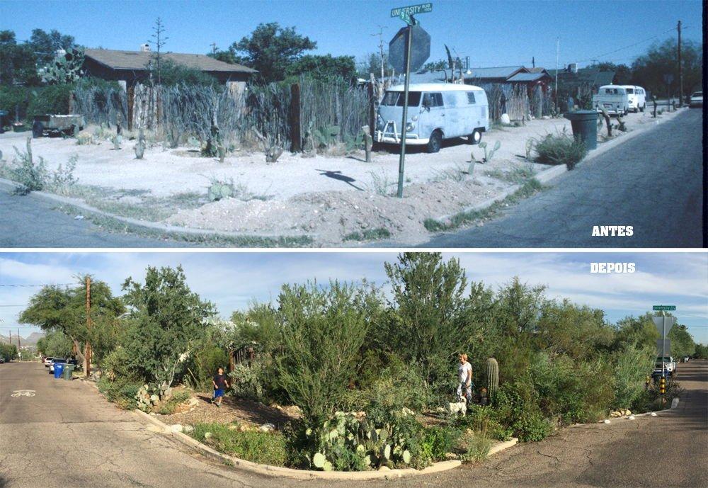 Los jardines de lluvia convierten un barrio desértico de Tucson en un oasis verde