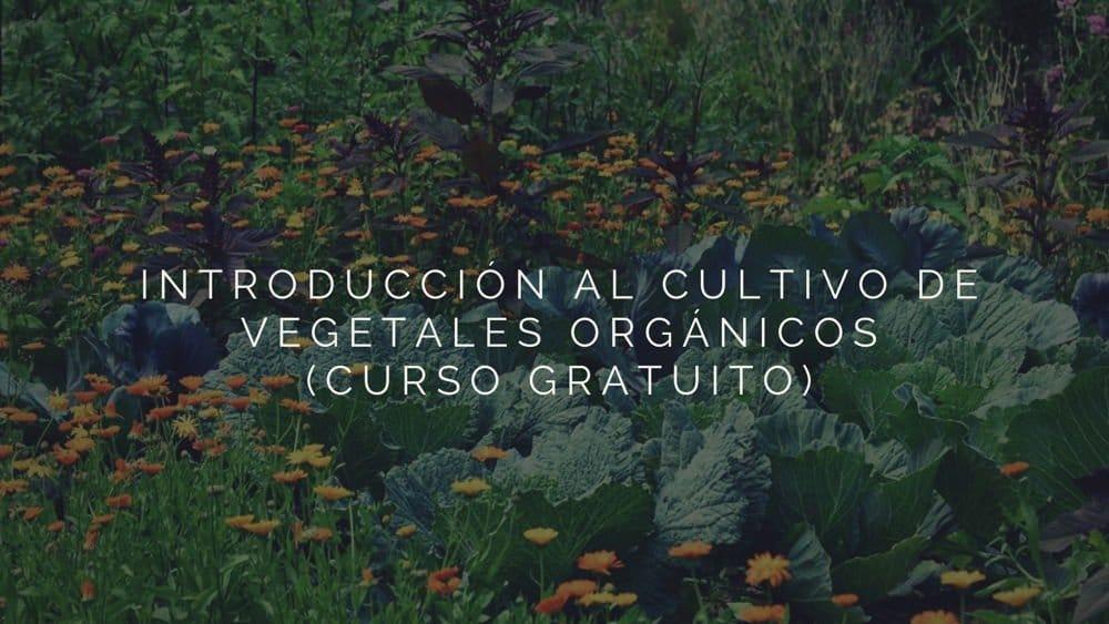 Introducción al cultivo de vegetales orgánicos