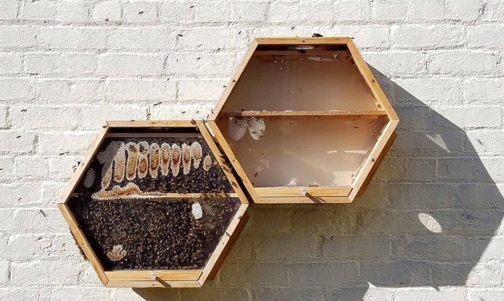 BEEcosystem, la innovadora colmena de observación de abejas modular