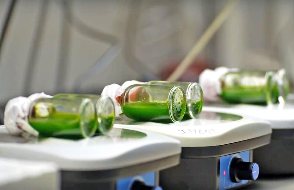 Paneles biofotovoltaicos a base de algas