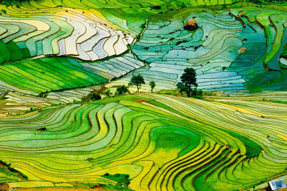 Agricultura-china