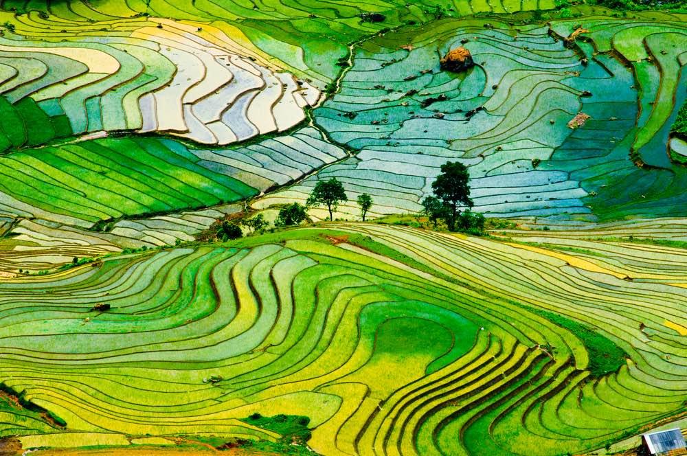 Menos fertilizantes, mayor rendimiento de cultivos y más dinero: el gran avance agrícola de China
