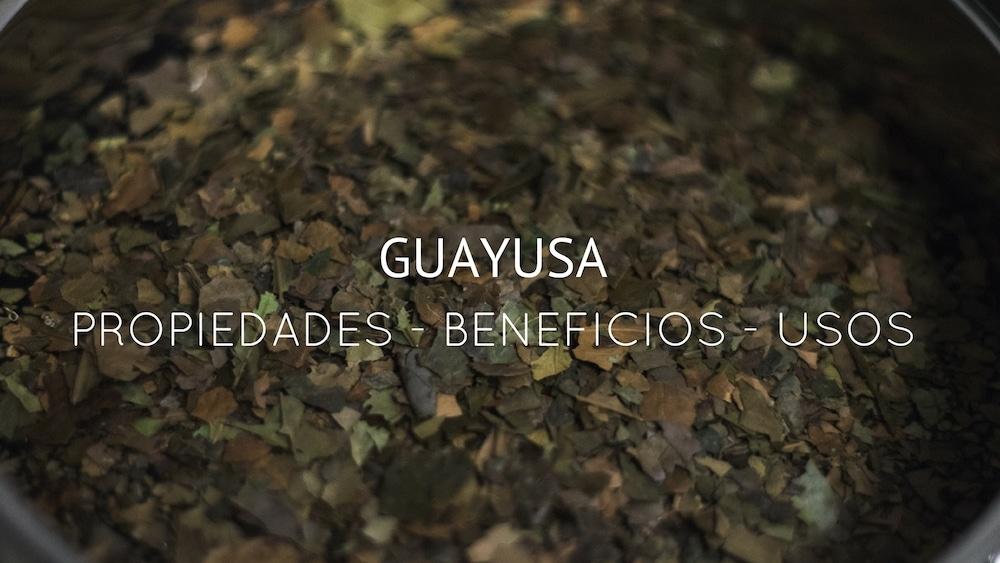 Guayusa-propiedades