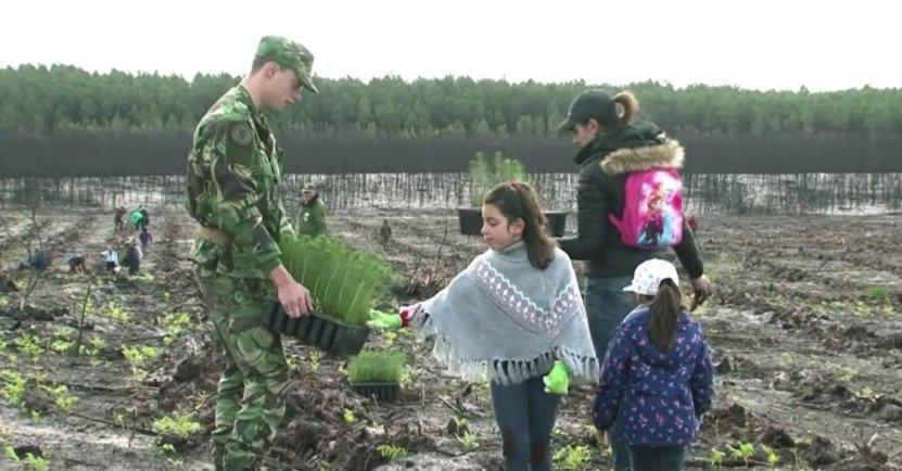 Voluntarios plantan 67.500 árboles en un bosque portugués devastado por los incendios forestales