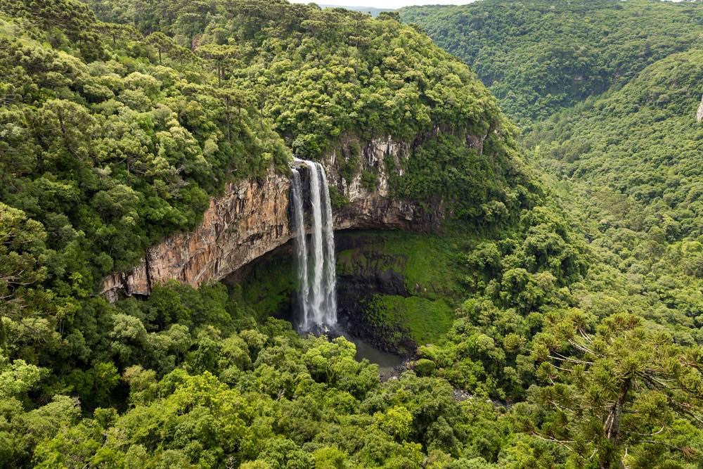 Amazonia-colombia